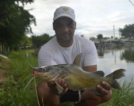 Yellow Catfish / Pla Kot Luang / Hemibagrus nemurus / catch by Thailand-Fishing.