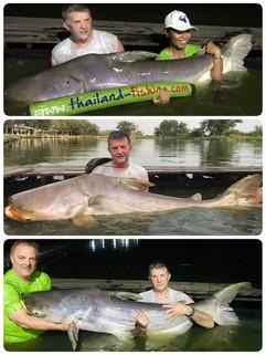 Many many Mekong Catfish by Thailand-Fishing.