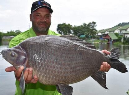 Black Sharkminnow by Thailand-Fishing.