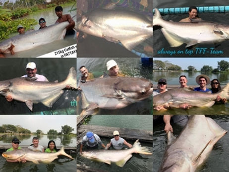 Mekong Catfish catch by Thailand-Fishing.
