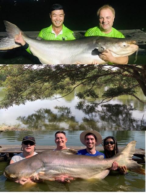 Giant Mekong Catfish