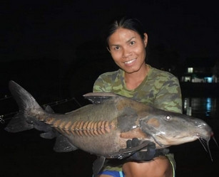 Ripsaw Catfish / Niger Catfish / catch by Thailand-Fishing.