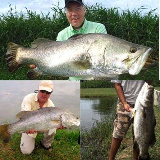 Barramundi / Pla Kapong Kao / Lates Calcarifer / catch by Thailand-Fishing.