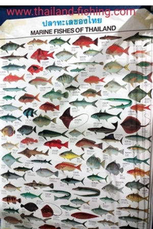 Map of Sea Fish. Come and catch more fish species in Thailand with Thailand Fishing. Maybe your photo will be here soon.