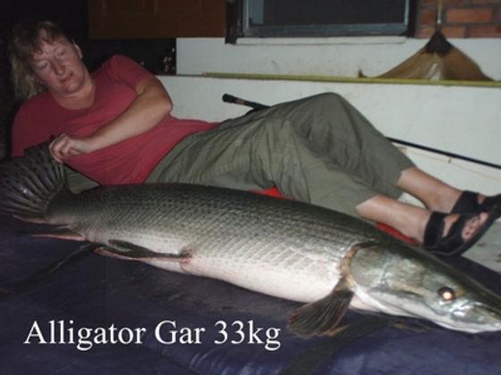 Alligator Gar / Pla Gar / Atractosteus Spatula / catch by Thailand-Fishing.