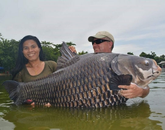 Giant Siamese Carp / Pla Kaho / Giant Barb / Catlocarpio Siamensis / catch by Thailand-Fishing.