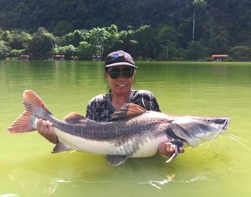 Tiger Catfish / Spotted Sorubim / Sorubim Hybrid / Leopard Catfish / Pla Tiger / Pseudoplatystoma Hybrid / catch by Thailand-Fishing.