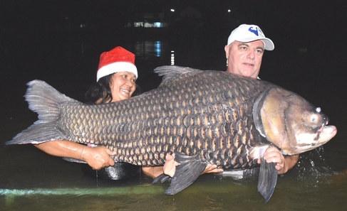 Giant Siam Carp.