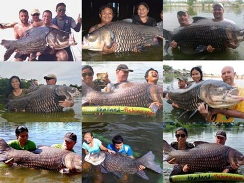 Giant Siam Carp catch by Thailand-Fishing.