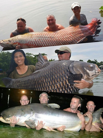 Thailand fishing catches the biggest fish.