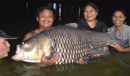 Thailand-Fishing love Giant Siam Carp.