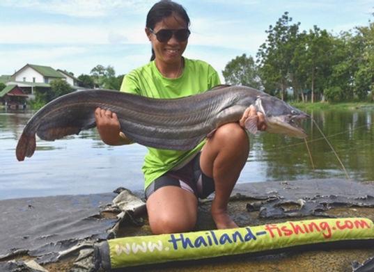 Wallago Attu Catfish / Great White Sheatfish / Pla Khrao / Wallago Attu / catch by Thailand-Fishing.
