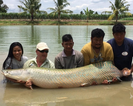Huge Arapaima with spin fishing.
