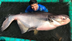 Giant Mekong Catfish catch by Thailand-Fishing.