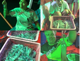 fish for live squid in pattaya.