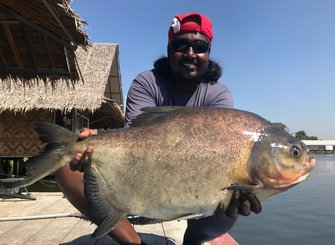 Pacu from Thailand Fishing