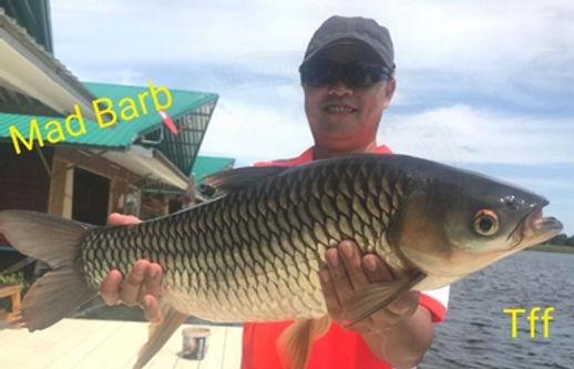 Mad Barb / Hovens Carp / Pla Ba / Leptobarbus Hoevenii / catch by Thailand-Fishing.