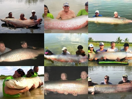 Arapaima Gigas catch by Thailand-Fishing