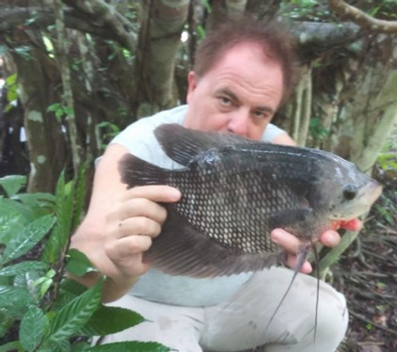 Gouarmi  Wild / Pla Lat / Osphronemus Goramy / catch by  Thailand-Fishing.