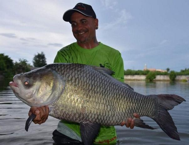 Catla Carp / Kaho India / Catla Catla / catch by Thailand-Fishing.