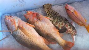 Ocean Fishing Pattaya Trips.