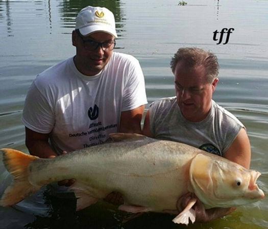 Albino Chinese Bighead Carp / Pla Tjin / Pla Song Hu / Hypophthalmichthys Nobilus / catch by Thailand-Fishing.