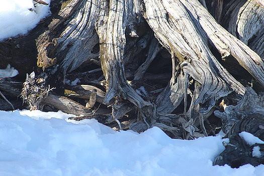 roots-paula-daniels.jpg