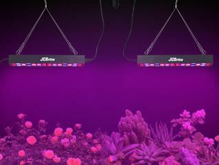 LED Grow Lights vs High Pressure Sodium Grow Lights