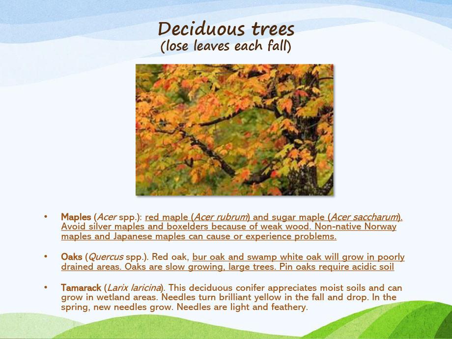Michigan-Native-Trees-PP-7.jpg