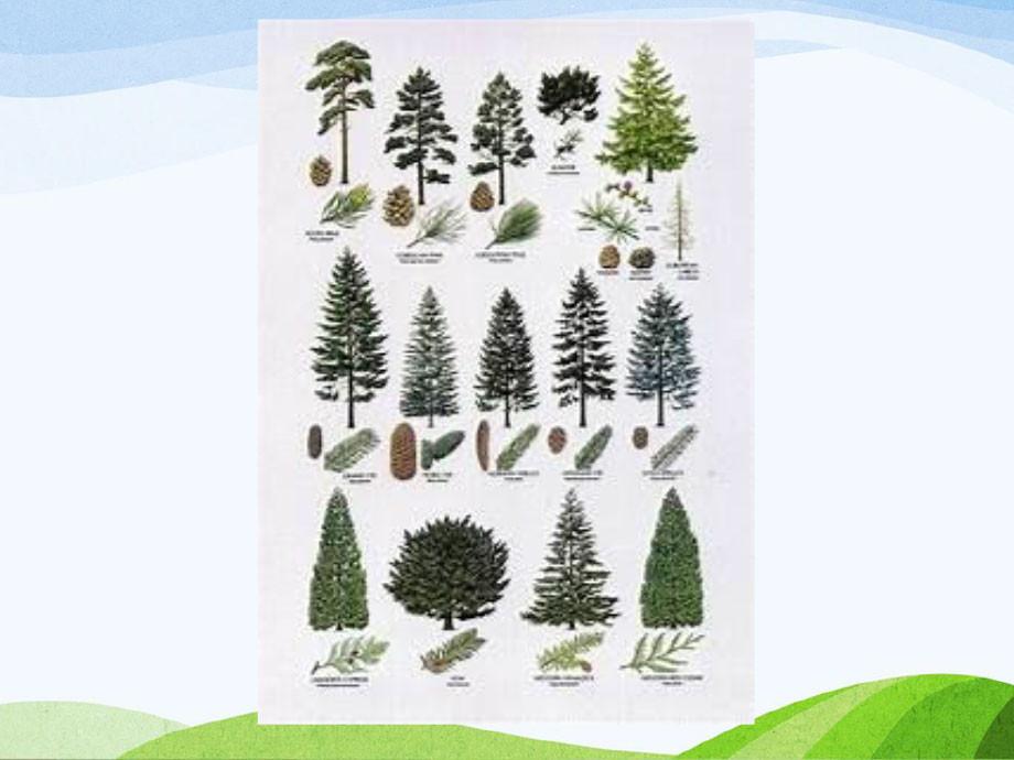 Michigan-Native-Trees-PP-6.jpg
