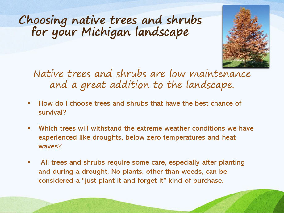 Michigan-Native-Trees-PP-3.jpg