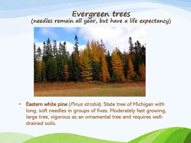 Michigan-Native-Trees-PP-5.jpg