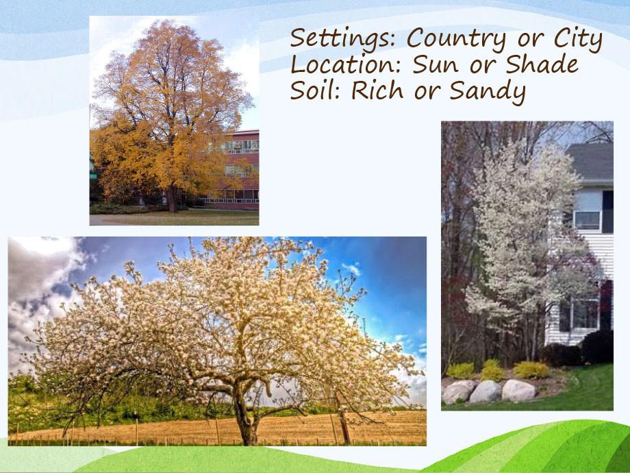 Michigan-Native-Trees-PP-2.jpg