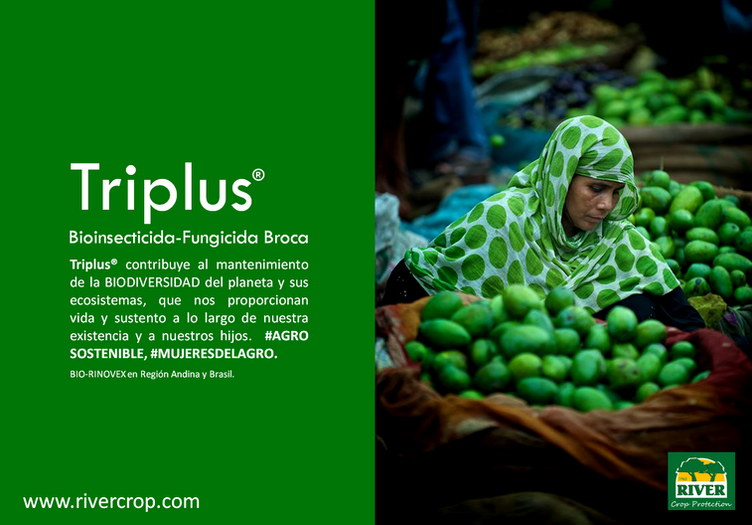 PRES. TRIPLUS 4.png