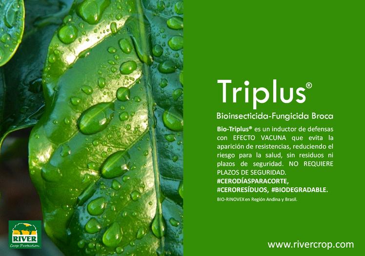 PRES. TRIPLUS 3.png