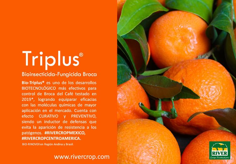 PRES. TRIPLUS 2.png