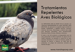 TRATAMIENTOS AVES.png