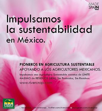 IMPULSAMOS MEXICO.png