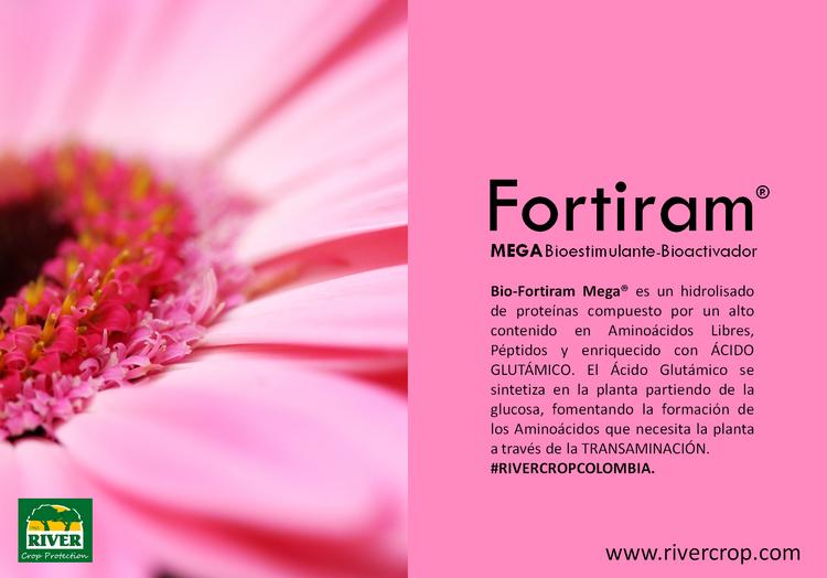 FORTIRAM MEGA INFO.png