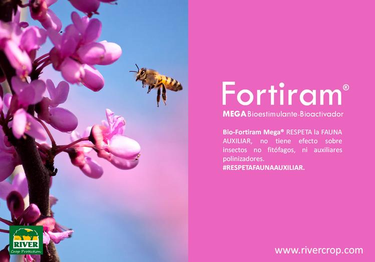 FORTIRAM MEGA AUXI.png