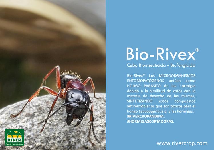 RIVEX BIOINSECTICIDA ARRIERAS.png