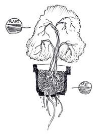 potplant-idee.jpg