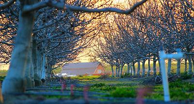 US Orchard.jpg