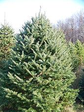 Lazy Susan Christmas Tree