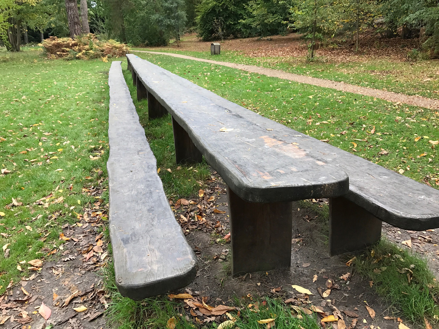 England's longest picnic bench - carved from a single piece of wood