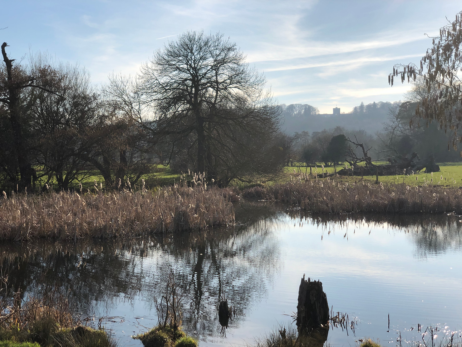 Pond at Ankerwycke with views of the Runnymede Memorial