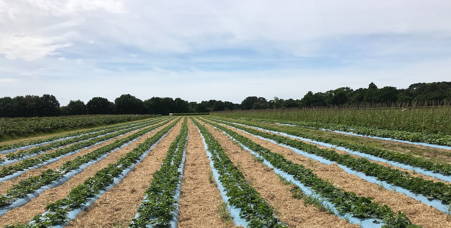 Grays Farm Fruit Picking