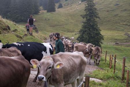 Viehscheid Vorbereitungen im Sommer/Herbst 2018