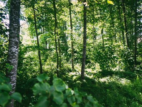 Eine Ode an den Wald