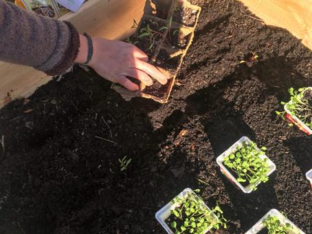 Jetzt geht's ans Gemüse anpflanzen!